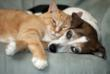 Free Microchip ID: Pet Identification Adoption Day: First Event for...
