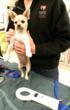 Violet being examined by SF SPCA veterinarians.