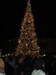 Festive Holiday Tree Lighting at Jack London Square