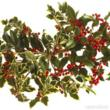 Holly, Assorted Holly, Christmas Holly, Christmas Greens, bulk Christmas Greens, wholesale Christmas Greens, bulk Holly, Wholesale Holly, fresh cut Christmas Greens