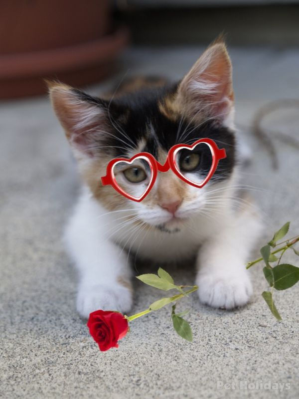 valentine's day cats wallpaper