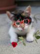 Kitten Valentines Day  picture