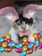 Kitten Easter photo