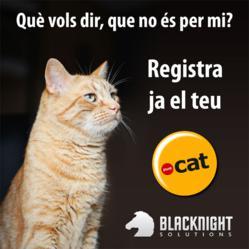 .cat domain name promotion