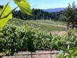 Bravium Vineyard