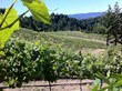 John Gilman Places Bravium Winery Among Emerging Neo-Classical Pinot Noir Producers