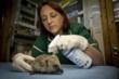 "Innovacyn Names Winners of the ""Vetericyn Loves Animals""..."