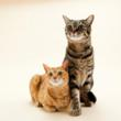 Winnipeg Humane Society Waiving Adoption Fees for Cats: Hundreds of...