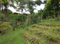 Dominical Property Home with 53 Acres