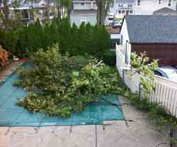 home repairs include tree removal