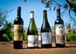 Labels designed by Proof Wine Collective: