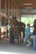 Learning to groom horses at this summer's Horses For Heroes event at the farm