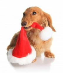 What Will 63% 0f Dog Owners be Doing on Black Friday?