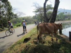 Bicycling India