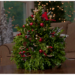 Red Cardinal Boxwood Christmas Tree