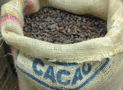 Bag of Raw CocoaJoe Cocoa Beans