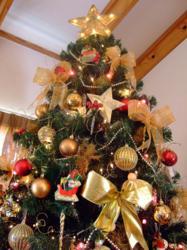 Top Christmas Tree Firms