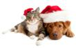 Buy a Sweet Treat, Help an Animal in Need at Paws for the Season