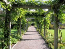 gardening wholesale