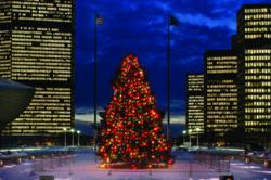 Photo from Albany, NY of Christmas Tree lit at night
