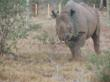 Monduli enjoying life on the protected reserve c The Aspinall Foundation