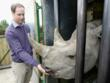 Prince William meets Zawadi before she leaves Port Lympne