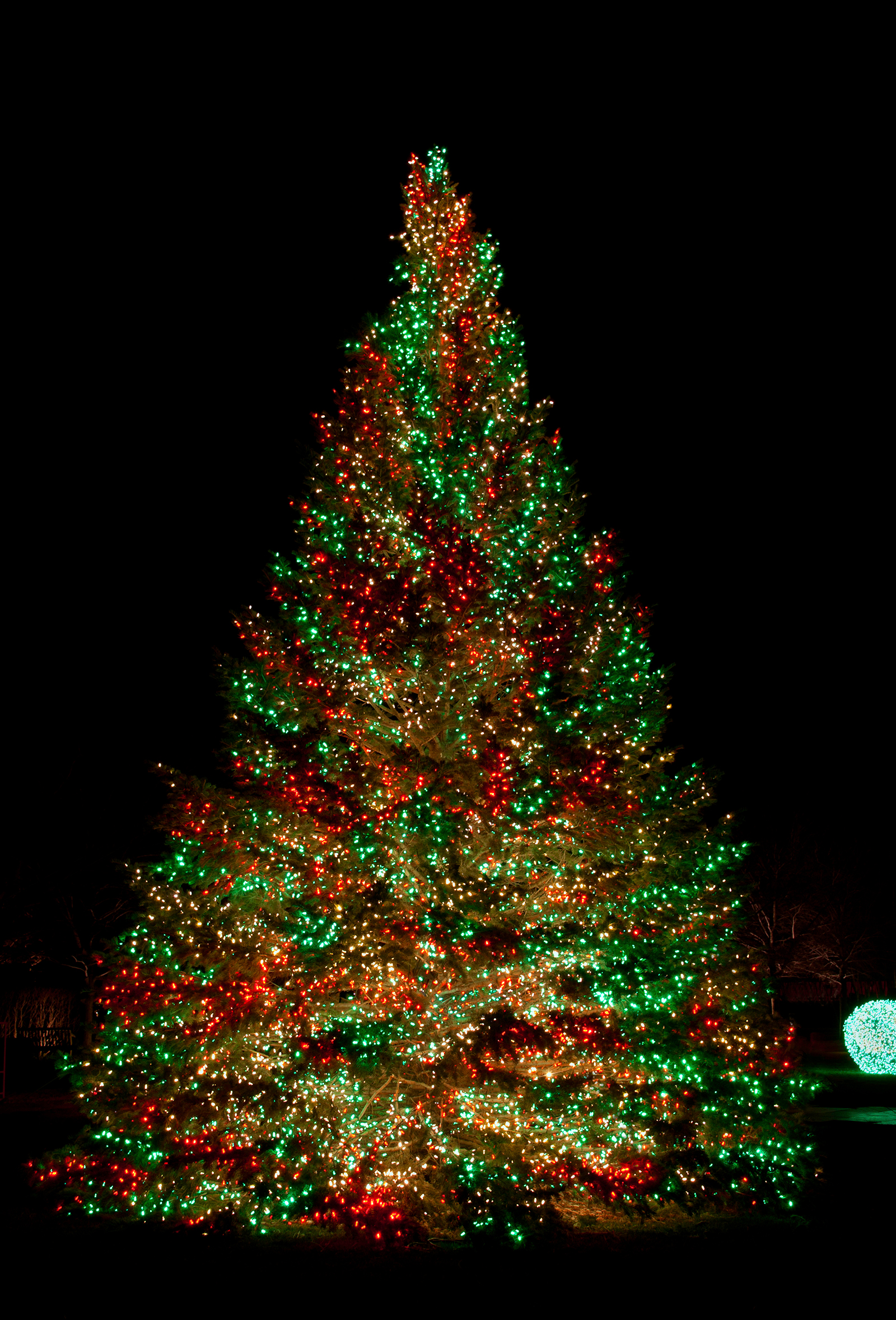 Christmas Tree Lights Gif Viewing Gallery
