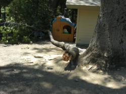 Newport Beach accident attorney gets large jury verdict for Crestline woman injured by tree branch.