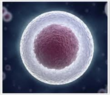 Cells Gene @ TriScience.com