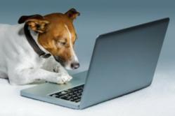 Dog Lovers Choose their Favorite Website of 2012