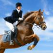 Horse Show in the Sun Beckons Coachella Valley Home Buyers States Brad...