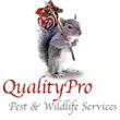 New Clients Get 10% Off of Squirrel Removal Services During Holiday...