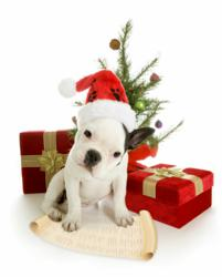 PSI offers tips for selecting a pet sitter during the busy holiday season.