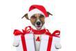 Woufbox – Miaoubox : le plus beau des cadeaux de Noel pour chiens et...