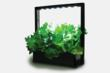 With the LED Mini Garden grow fresh food all year round