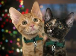 holiday pet tips, kittens and christmas tree, holiday kittens