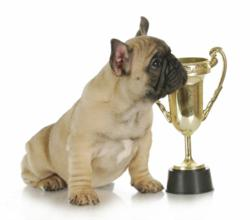 Dogington Post announced nominees for Best Dog Treat