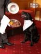 Finally, Gourmet Doggie Dining Is Here! Brought to you by Best Western...