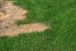 Lawn Care Colorado | Prevent Mite Infestation