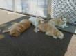 Dogs at Club K-9 take naps after playing