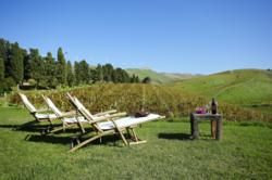 the stunning Cantine Virzì vineyards