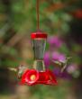 Beautiful & functional hummingbird feeders from Perky-Pet®.