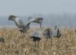 Nebraska Platte River Guided Birding Tour of Sandhill Cranes Announced...