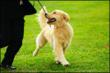 Palm Springs Kennel Club Dog Show Expected To Boost Palm Springs Real...