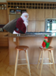 Picture of Santa in a kitchen