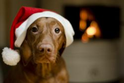 Dogington Post Releases a Dog Holiday Safety Initiative for Christmas
