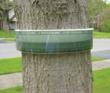 Tree Band Prevents Damage by Insects