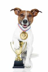 Nominees for Best Dog-Loving Celebrity in the 2012 Dogington Post Awards