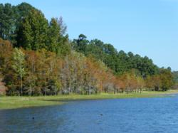 Lakefront, auction, land, acreage, Texas