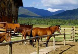 Northern Colorado Horse Properties